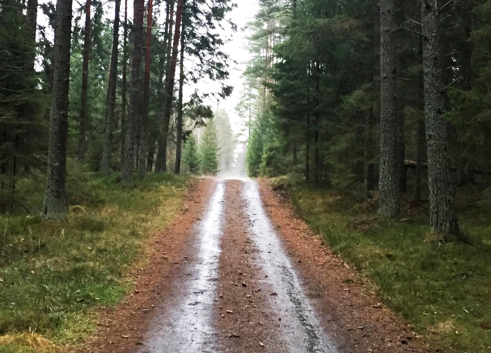 Höst - skog