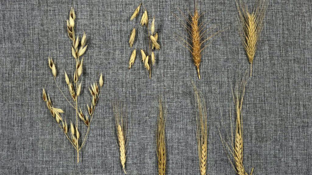 Kurs i odling av alternativa grödor 21-22 mars!