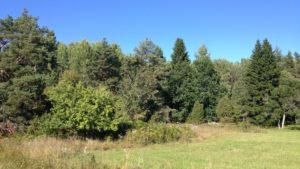 NNC söker naturgeograf_naturvårdsekolog